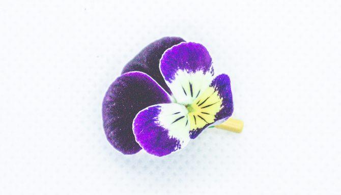 Fleurs & Feuilles gourmandes-Juil-18