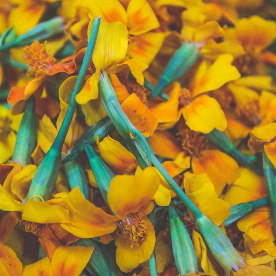 Fleurs-&-Feuilles-gourmandes-Tagète